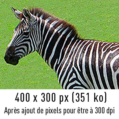 zebre-300