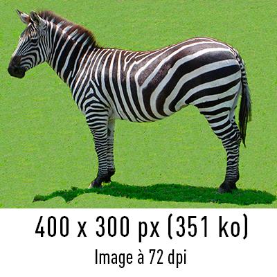 zebre-72dpi
